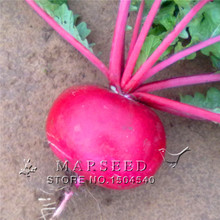 130 round red radish seeds Fruit and vegetable seeds  nutrition excellent delicious diy home garden Free Shipping