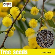 Free shipping beautiful Golden acacia tree Yellow Albizzia flower Seeds – 25 Seed particles
