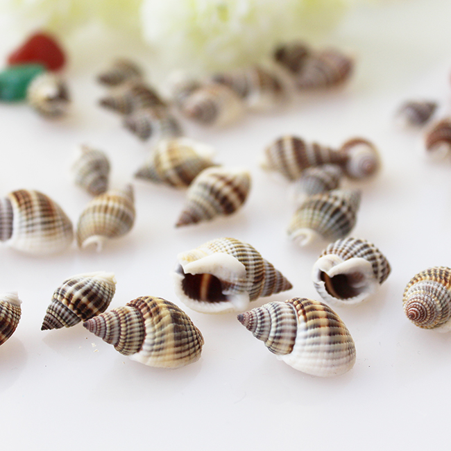 10pcs/lot    Sea Conch Shell Necklace Aquarium Decoration Diy  Natural Shells Sea Star