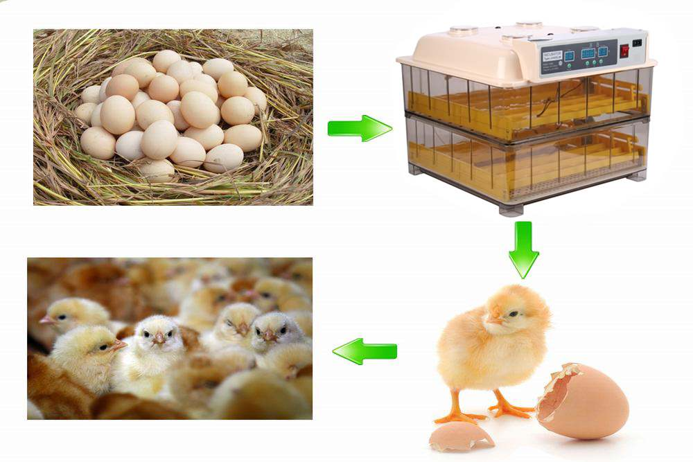 Hot Sale Poultry Hatchery Machine 96 Eggs Digital Temperature Full Automatic Egg Incubator for Chicken Duck Quail Parrot nanchang huatuo industrial company sale humidity and temperature controller 24 6336 chicken eggs