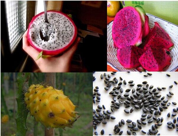 Resultado de imagen de pitahaya semilla