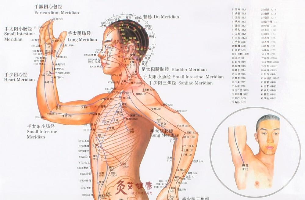Beste Karte Von Organen Im Körper Bilder - Anatomie Ideen - finotti.info