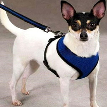 Pet Vest Rope Dog Chest