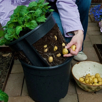 Pocketgarden 1 pcs plastic planter potato pot family garden balcony garden pots of organic vegetables planting bag of potatoes