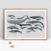 Whale Dolphin Marine Life Animals Art Prints Wall Canvas Painting Nordic Posters And Pictures Baby Room Decor