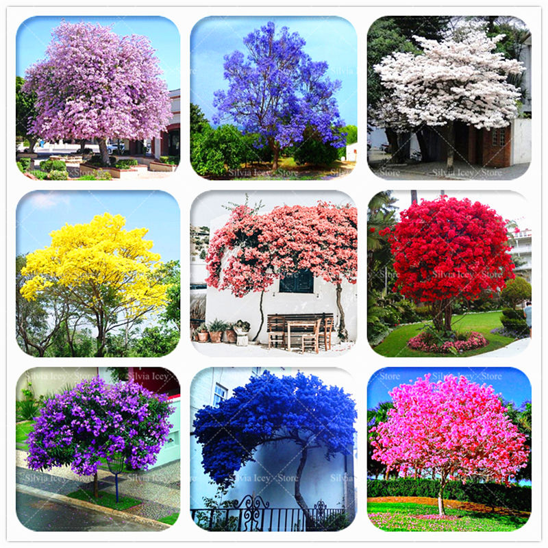 200 Pcs Ourdoor Paulownia Tree Bonsai Plants 10 Rare Colors Royal Empress Paulownia Tomentosa Tree Potted Plants for Home Garden fake rose flowers