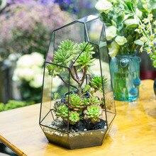 Bonsai Free Shipping Irregular Glass Box Tabletop Succulent Plant Terrarium Box Planter Flower Pot Moss Ferns Miniature