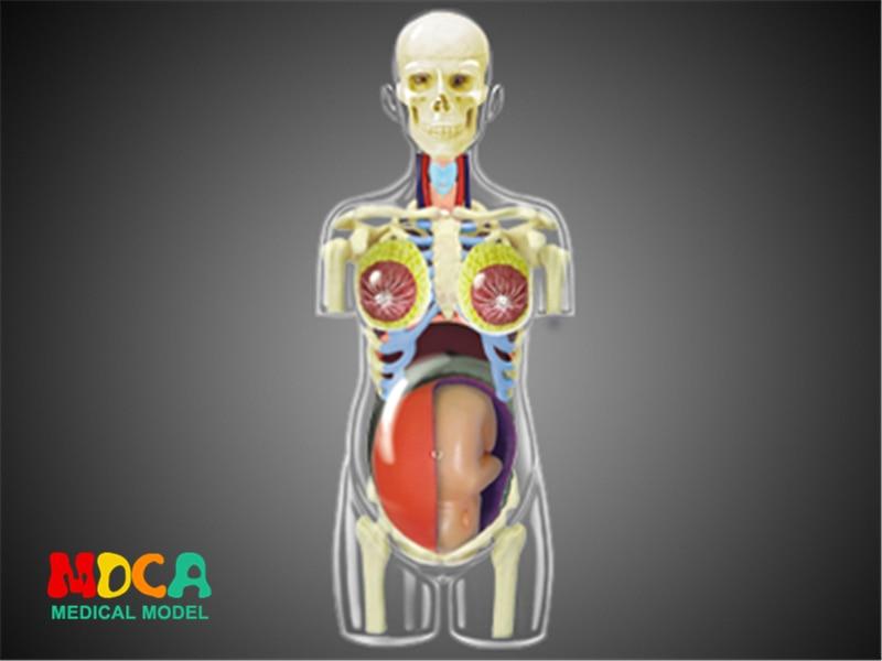 Pregnancy 4d master puzzle Assembling toy human body organ anatomical model medical teaching model hand 4d master puzzle assembling toy human body organ anatomical model medical teaching model