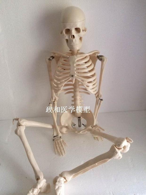 85 cm model szkieletu z podstawą art szkic edukacji medycznej ludzki model szkieletowy czaszka kręgosłupa model stawu w Nauki medyczne od Artykuły biurowe i szkolne na  Grupa 1