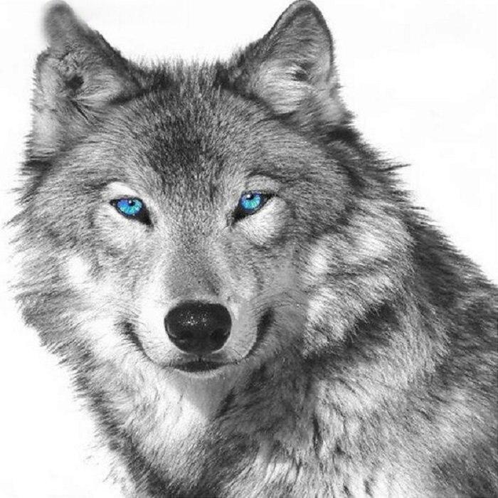 Full,Diamond Embroidery,Animal,wolf, pattern Diamond Painting,Cross Stitch,3D,Diamond Mosaic,Needlework,Crafts,Holiday,Gift