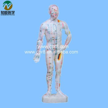 Acupuncture Human Body Model   (In Chinese) 26CM  BIX - Y1011  MQ018