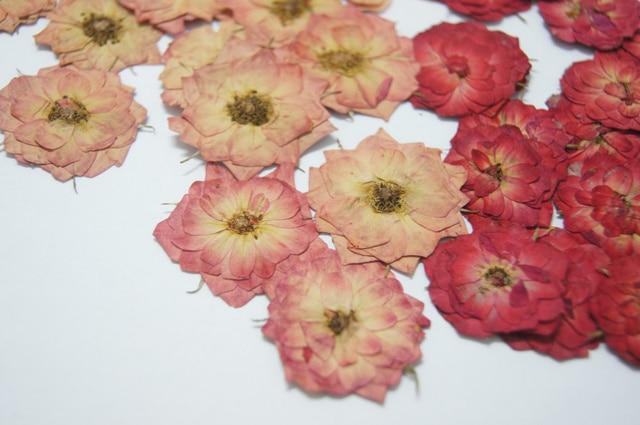 Pressed Flower Dried Diy Material Rose Herbarium Red Pink Gold 1 Lot 10bags