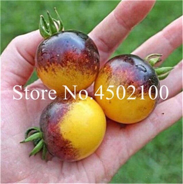 100 pz Fresco Heirloom Mostro di Pomodoro Bonsai Organico Rare Dolce Bonsai semi di Verdure Per La Casa Giardino piante in Vaso Facile da Coltivare