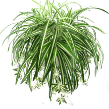 65cm 5 Heads Artificial Plants Wall Hanging Chlorophytum Green PVC Fake Flower Simulation Leaves Home Garden Decor
