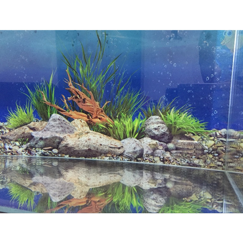 40 50cm h pvc double sided aquarium background poster for Oceanic fish tanks