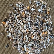 50 шт./лот, 0,9-1,3 см, маленькое разное украшение для дома из раковины, для натурального творчества, аквариума, аквариума, пейзажа