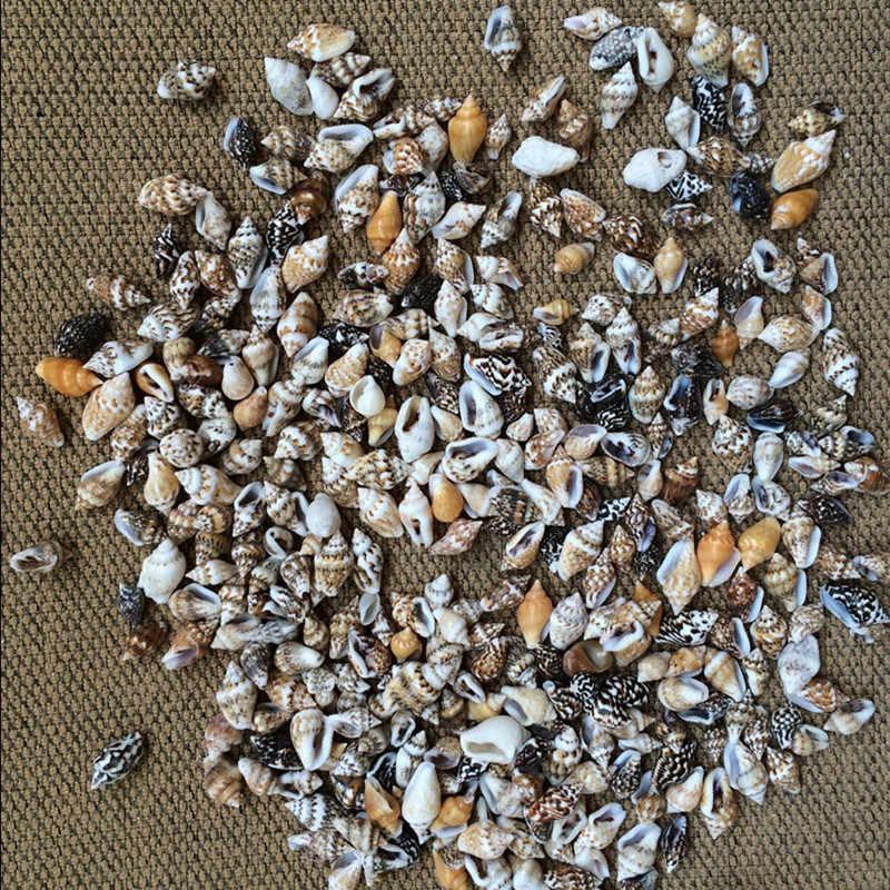 50 unids/lote 0,9-1,3 cm pequeño Conch misceláneo decoración del hogar Material Natural artesanía concha marina acuario paisaje