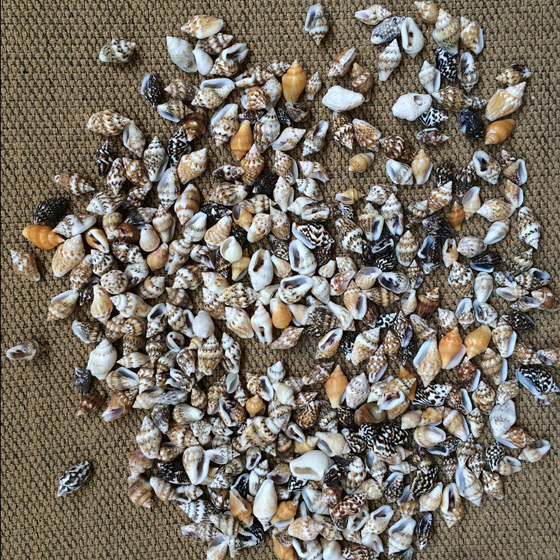 50pcs/Lot 0.9-1.3 cm Small Miscellaneous Conch Home toysDecoration Material Natural Craft Seashell Aquarium Fish Tank Landscape