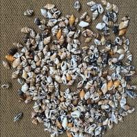 50pcs/Lot 0.9-1.3 cm Small Miscellaneous Conch Home toysDecoration Material Natural Craft Seashell Aquarium Fish Tank Landscape