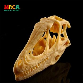 Skull model dinosaur skull model skull and resin Skull KLGT019 фото