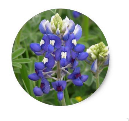 Купить с кэшбэком 1.5inch Texas Bluebonnet Classic Round Sticker
