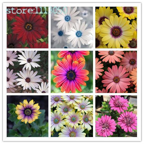 compra potted daisies y disfruta del envío gratuito en aliexpress