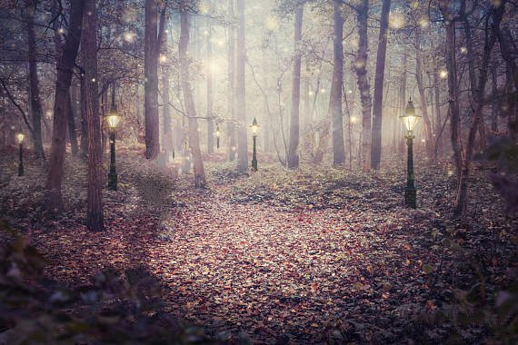 Enchanted Woodland Forest Tree Lights Fantasy Background