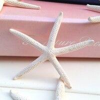 HappyKiss White Starfish Real White Finger Starfish Drapery Hold 2