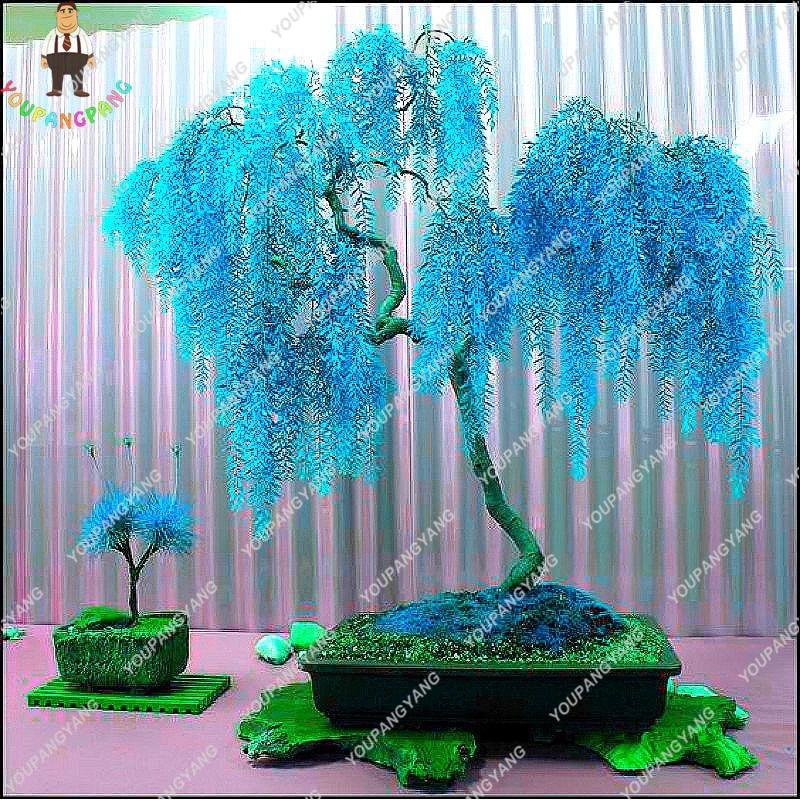 50pcs Rare Sky Blue Willow Bonsai Chinese Perennial Flower Indoor Plants Bonsai Evergreen Bonsai Tree Garden Decoration Hot Sale