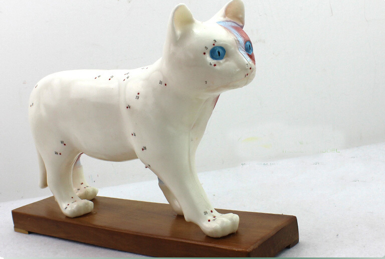 cat anatomical models cat acupuncture point model educational model ...