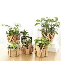 Adeeing Creativo di Legno Piante Succulente Vaso di Fiori Semplice Fioriera Home Office Decorazione