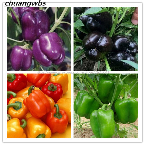 100pcs Chili sweet Pepper Seeds Plants potted bonsai garden courtyard balcony plant seeds New Arrival ...