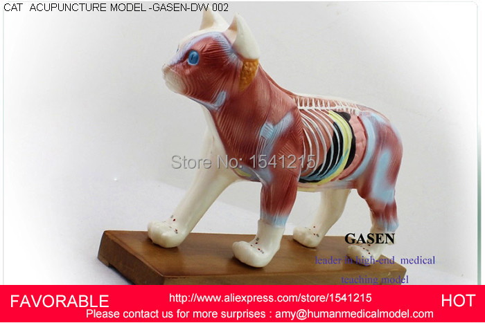CAT ANATOMICAL , ACUPUNCTURE POINT EDUCATIONAL , CAT MODEL,CAT ACUPUNCTURE MODELS-GASEN-DW002 22cm head acupuncture point model head acupuncture four function model acupuncture model
