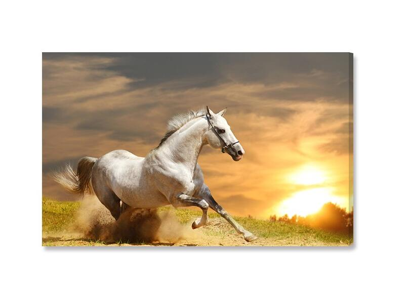 Aliexpress Buy Single Animal Painting Running White Horse Art HD Picture Modern Home Living Room Wall Decor Canvas Print Oil Unframed From