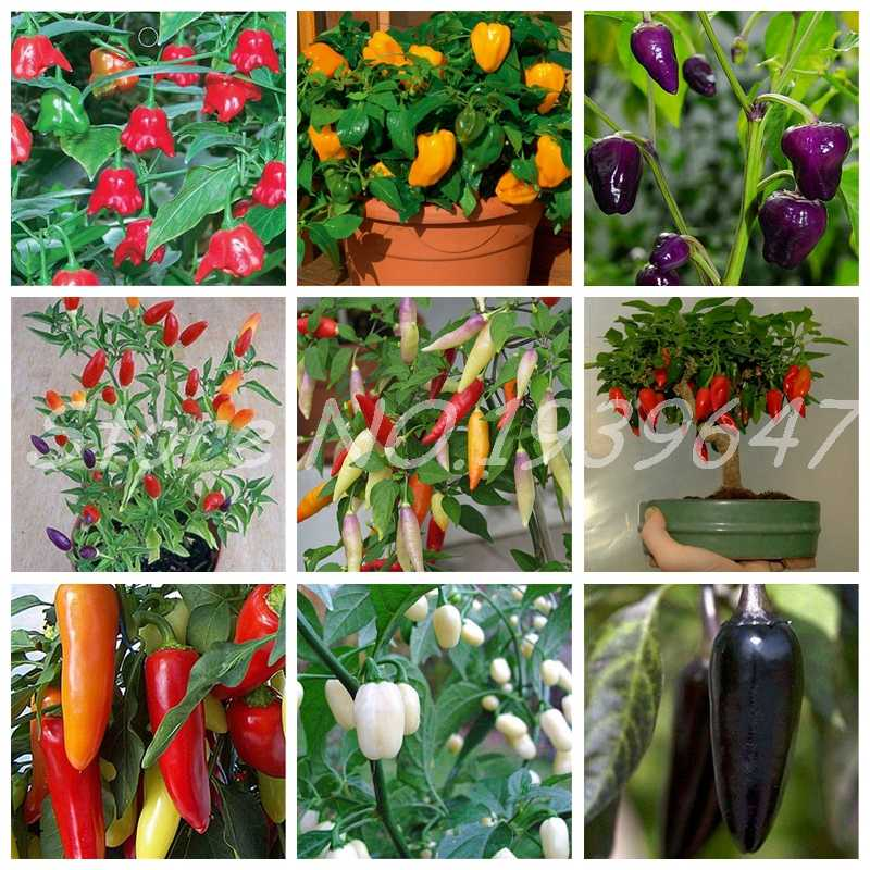 100 יח'\שקית חם צ 'ילי צמחי קרוליינה Reaper אורגני בונסאי ירקות קשת פעמון Ghost פלפל עציצי בית גן קל לגדול