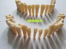 Ограниченное предложение 28 шт./пакет зерна зубы модель смолы Материал для подготовка зуба упражнения преподавания