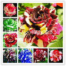 100 Pcs Ruby Rose Bonsais Diy Home Garden Rainbow Black Blue Dragon Rose Home Garden Perennial Plant Gift Tree Loss Promotion(China)
