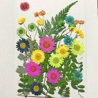 Các loại Khô Ép Hoa + Leaf Lá Cây Herbarium Đối Với Trang Sức Khung Ảnh Trường Hợp Điện Thoại Craft Làm DIY-DH013