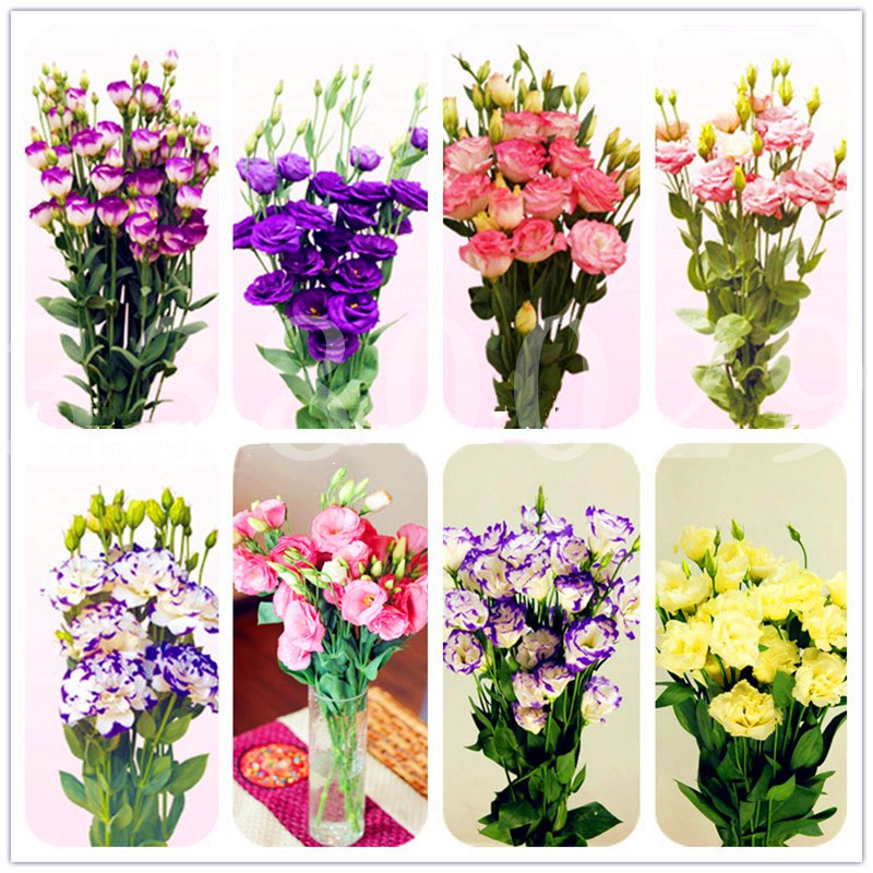 100pcs Eustoma Bonsai mixed colors Lisianthus flower perennial indoor flowering potted plants for home garden plants planting