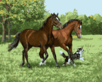 Hot Selling Horse And Dog DIY Oil Painting Acrylic Paint Crafts Digital Frameless Handpainted By Numbers