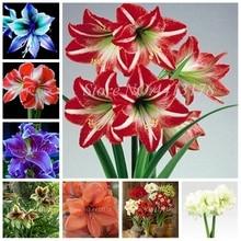 Hot Amaryllis Bonsai 100 Pcs Chinese Cheap Flower Plants Hippeastrum Plant Pots Garden Balcony Easy Grow