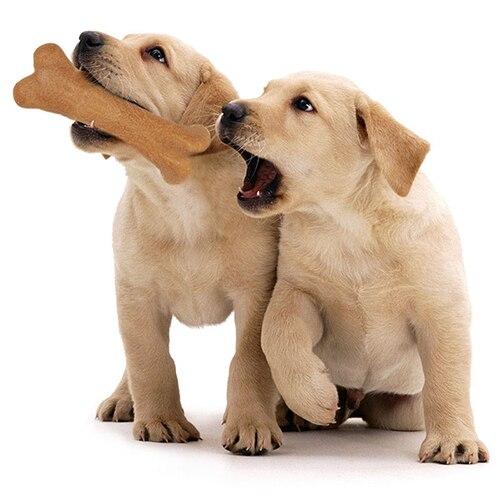 Smart Bone Dog Toy