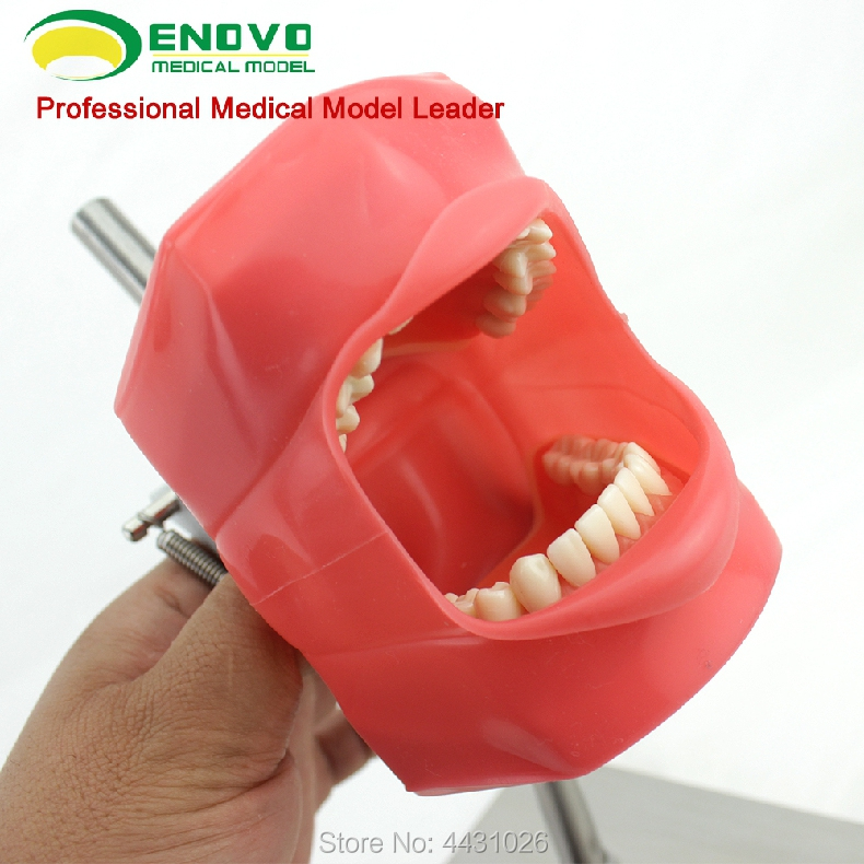 цена ENOVO Dental doctor training of oral bionic head mould system to prepare dental teaching model