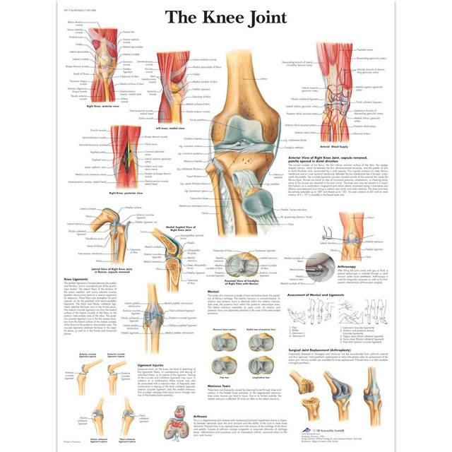Medical Anatomy Anatomical Knee Joint Chart Classic Canvas Paintings ...