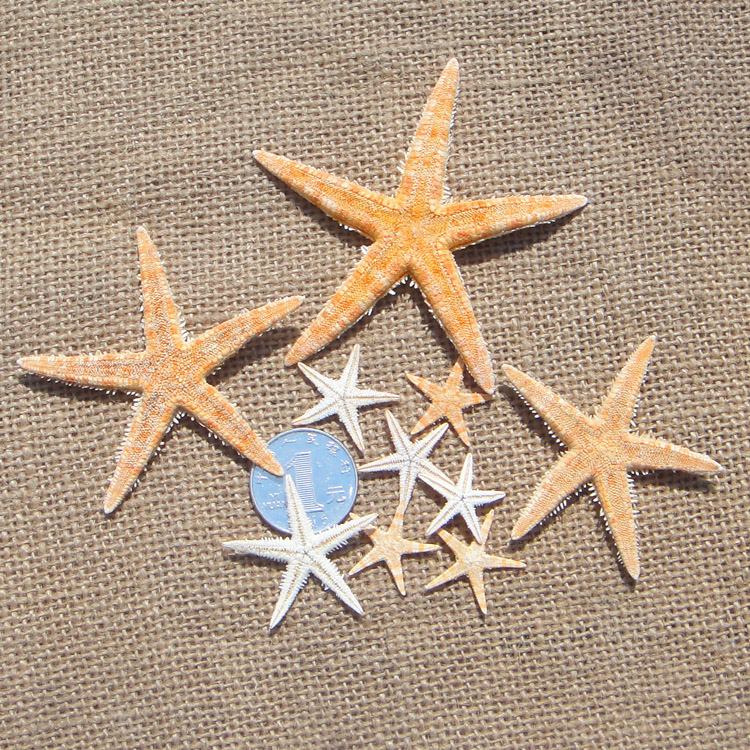 HappyKiss Small Starfish Shell Fish Tank Diy Crafts Accessories Gift Mini Sea Star Scrapbooking Carft For Party Home Decoration