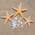 Pequena estrela do mar shell tanque de peixes de artesanato diy acessórios presente mini estrela do mar Carft Scrapbooking para a festa de decoração de Casa