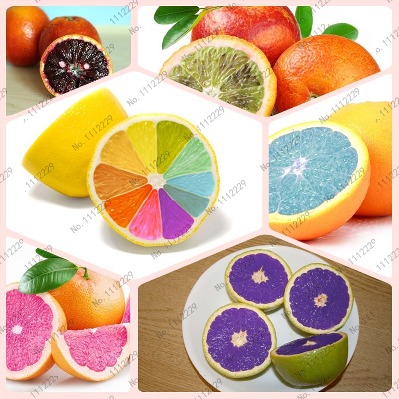 50pcs Edible Fruit Mandarin Bonsai Tree Seeds, Citrus Bonsai Mandarin Orange Seeds, garden bonsai DIY, free shipping