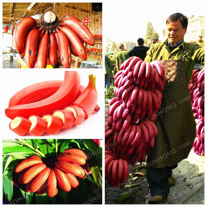 100 PCS Very Rare Red Banana Bonsai Outdoor Perennial Interesting Plants Milk Taste Delicious Fruit Plant For Home Garden