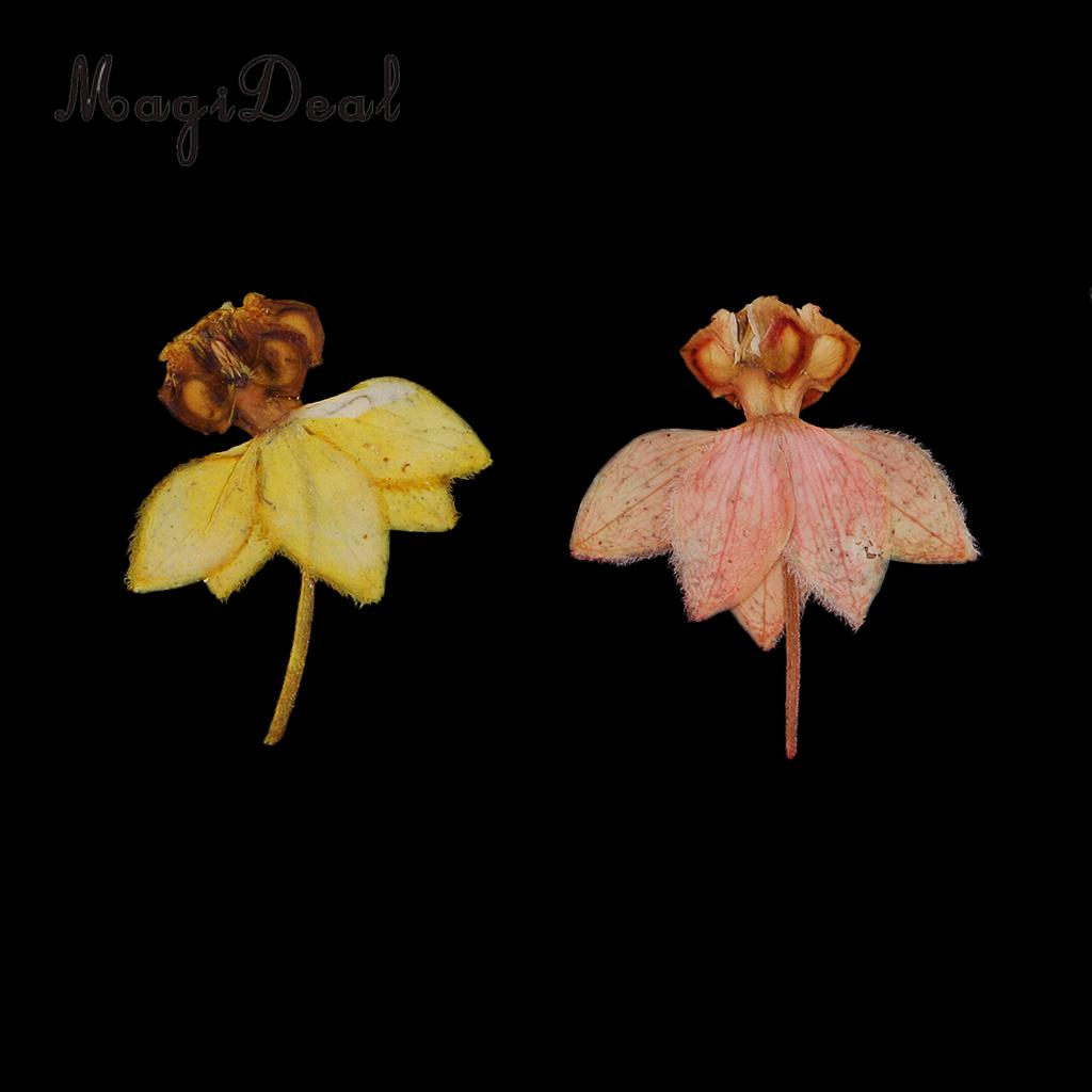 20 Real Pressed Dried Dancing-Doll Orchid Flowers for Scrapbooking Art Craft