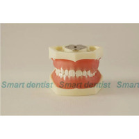2016 Tooth Care Dental Teaching Study Model Adult Standard Typodont Demonstration Soft Gum FE Articulator